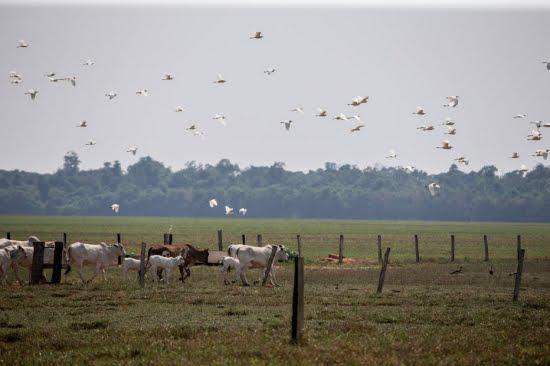 Brasil pode ganhar R$ 2,8 trilhões com 'economia verde', diz estudo